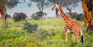 On Safari In Kenya and Tanzania