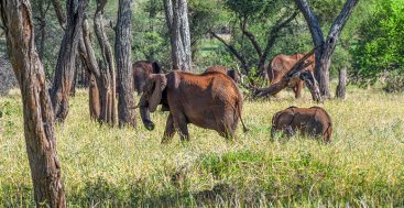 Tanzania: A Great Wildlife Experience