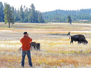 man photographing bison seen on a Yellowstone family vacation