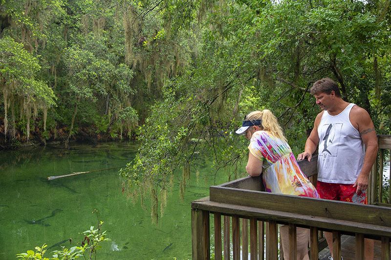 Two people looking into a spring in Blue Spring State Park