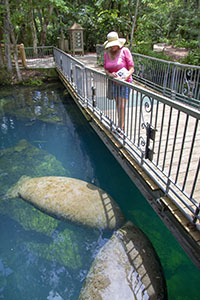 A woman watching manatees in Homosassa Springs Wildlife State Park