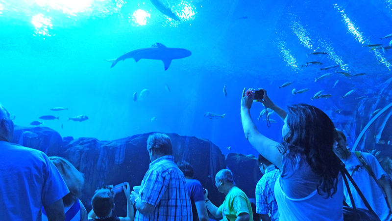 people in an quarium, one of the things to do in atlanta with kids