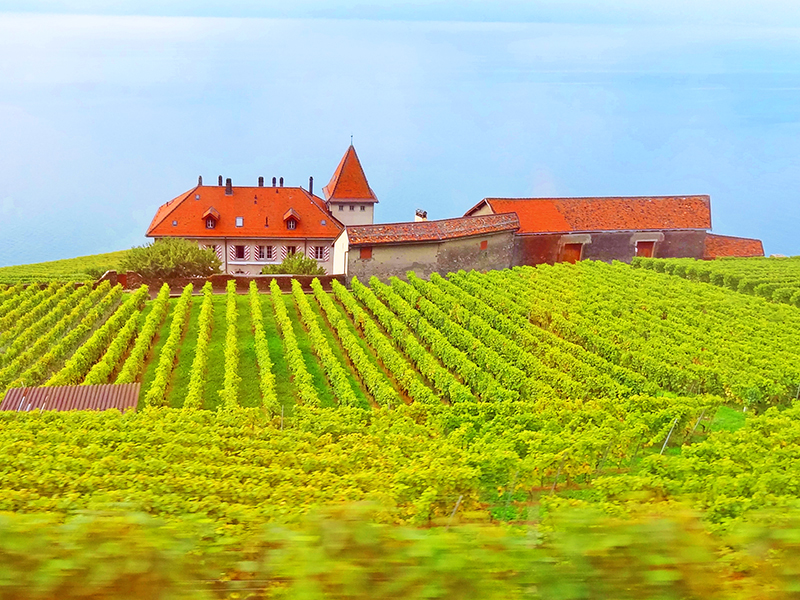 A winery in the Lavaux Vineyards