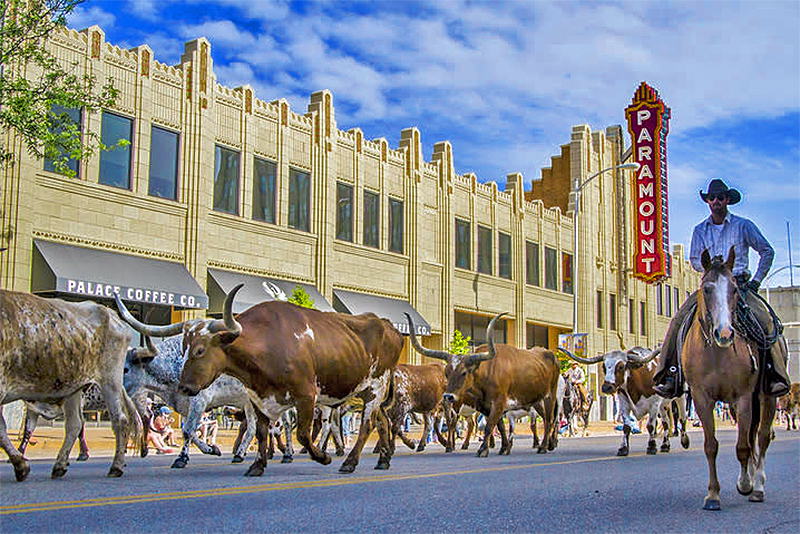 A cattle drive through downtown Amarillo in the Texas panhandle