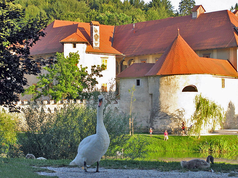 a swan by a medieval building in an area that's good for wellness travel
