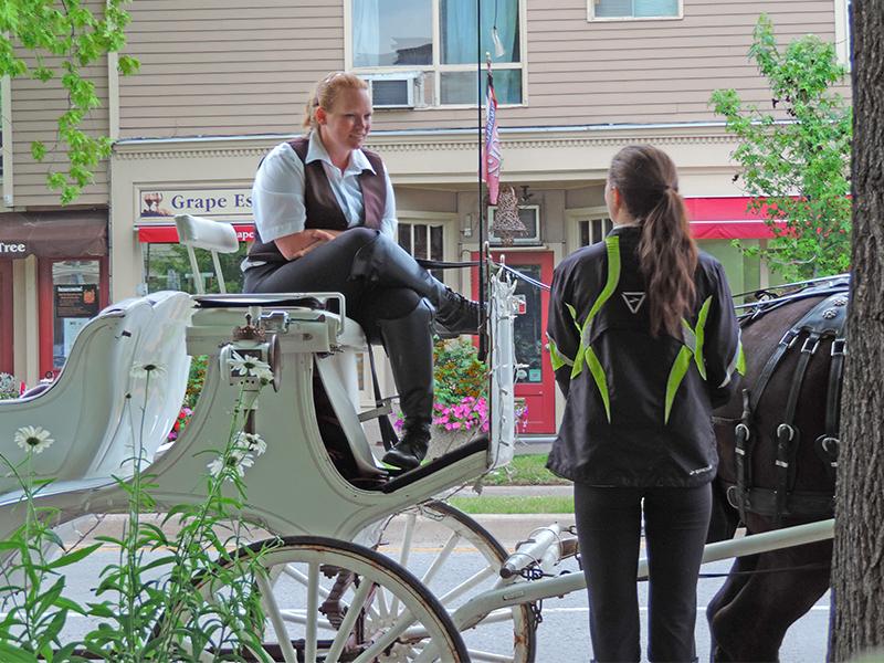 a horsedrawn carriage in Niagara-on-the-Lake