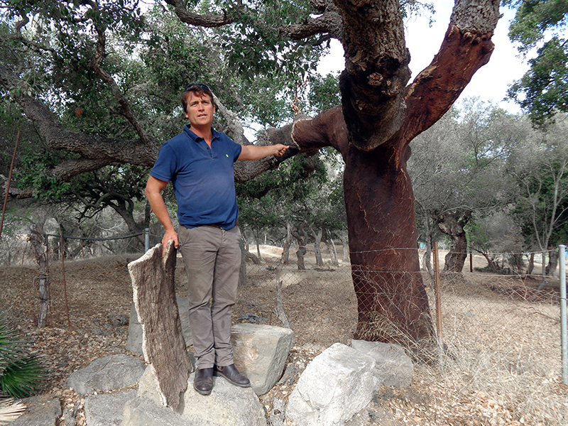 A man talking about cork trees
