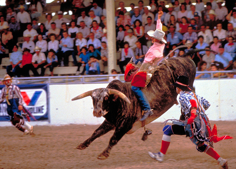 a rodeo, one of the things to do in San Antonio on a budget