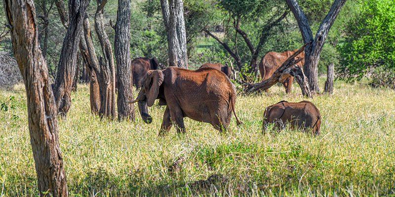 ---DSC_5139--elephants-Lake Manyara -400--B